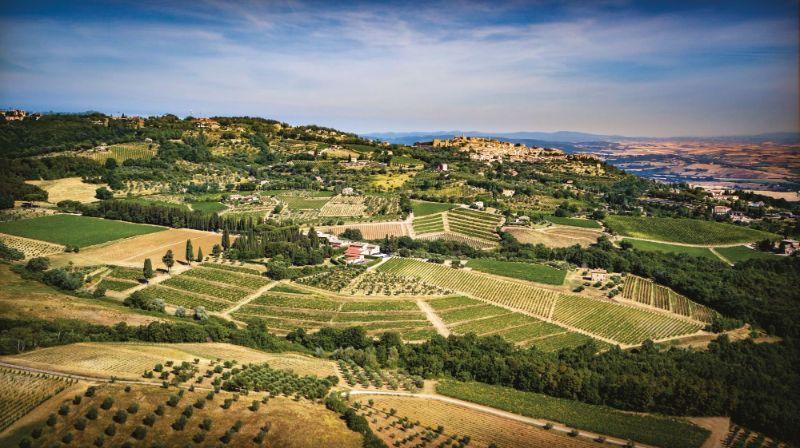 The Best Italian Wine Brands Every Connoisseur Needs To Try italian wine brand The Best Italian Wine Brands Every Connoisseur Needs To Try 12140741 greppo biondi santi estate article 800x448